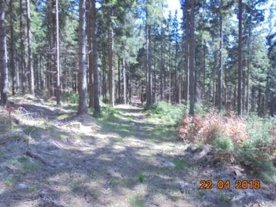 las po drodze na Borówkową