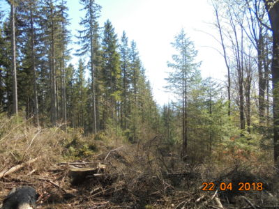 wyręb lasu po drodze na Borówkową